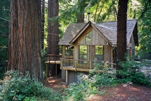 Our Home in the Redwoods