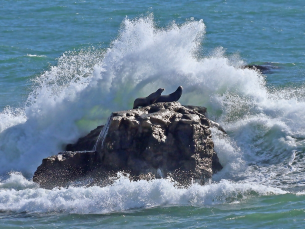 SEA LION WAVE-2