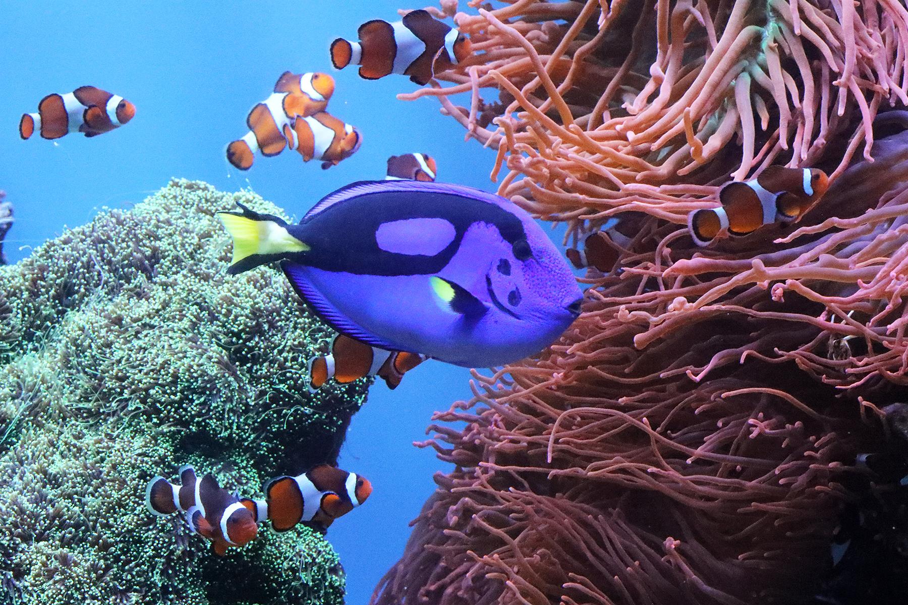 The Age of Aquariums | Carla Brennan's Blog